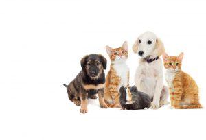 pets image 1